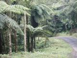 Forest walk, Botanical Gardens - 1