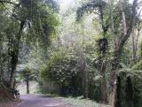 Forest walk Botanical Gardens - 3