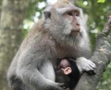 Mother & daughter, Ubud Monkey Forest