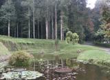 Pond in Botanical Gardens, Candikuning