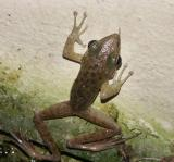 Frog Two