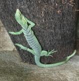 Green lizard, Bali Reptile Park