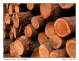 Felled Logs