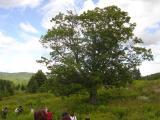 La fameuse arbre...