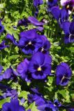 0539-flower.jpg