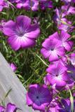 0522-flower.jpg