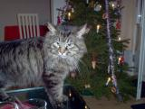 Hugo at Christmas 2003