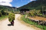 Haa Valley Trek