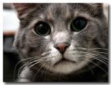 1654-great-cats.jpg