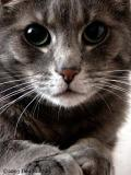 1665-grey-cats.jpg