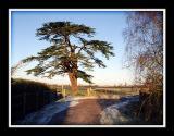 My favourite tree again!!, Martock