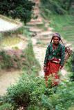 Farming Woman, Siruwari Balami Gau
