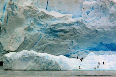 Welcoming Committee, Antarctica, 2004