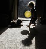 Boy, dog, and yellow balloon