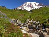 Rainier-Meadow.jpg