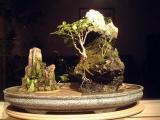 Bonsai and Inside Surrounding