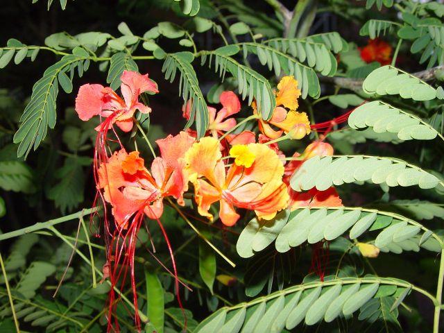 Hoa �iệp Nam Mỹ