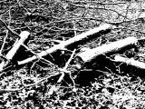 Still Logs