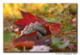 When Fall Strikes ...
