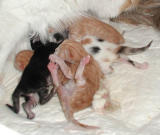 Kittens right after the birth on Dec. 11. 2001