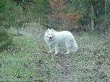 Mutts at Binder Lake 12-02-01