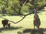 G'Day Mate (Kansas City Zoo)