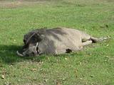 Am I pretty or what? (Warthog at San Diego Zoo)
