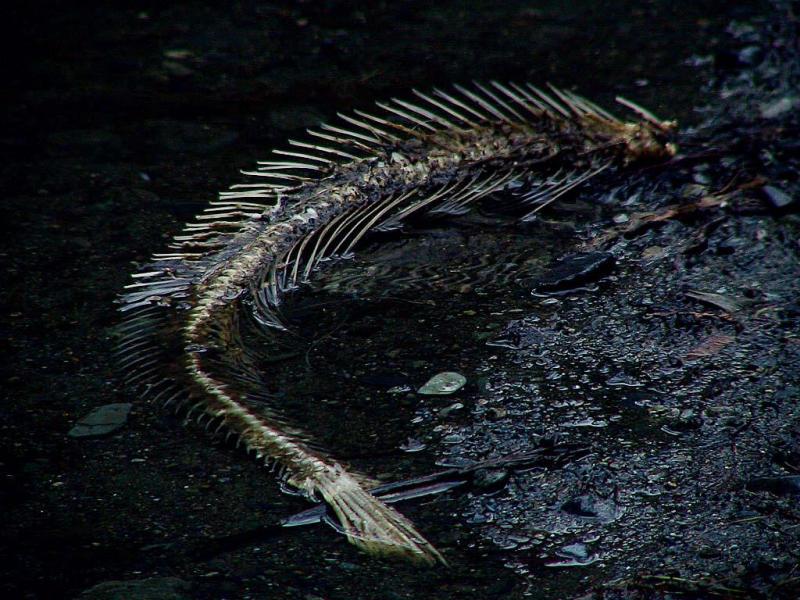 Skeleton art.jpg