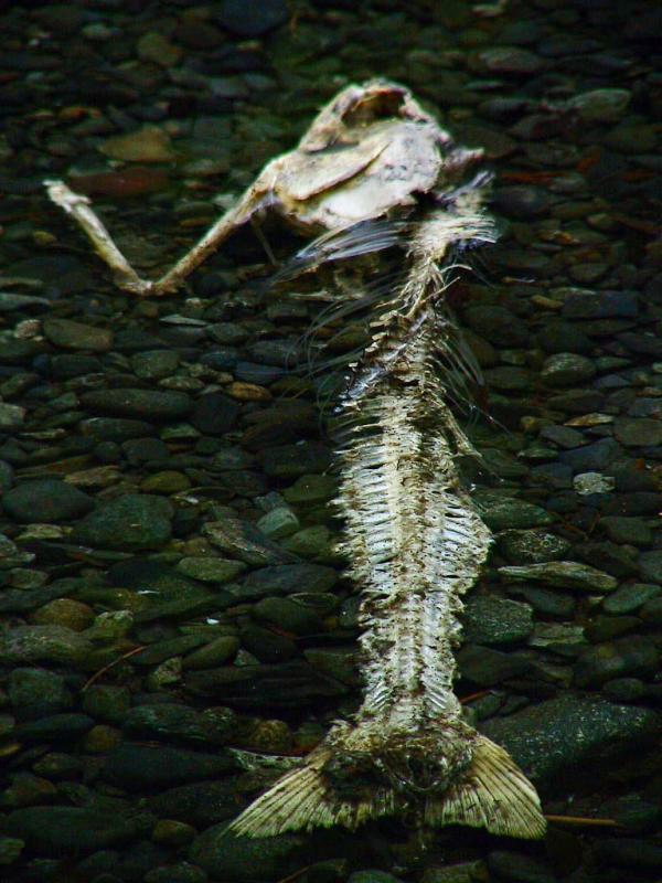 Underwater remains.jpg