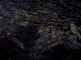 Salmon graveyard 2.jpg