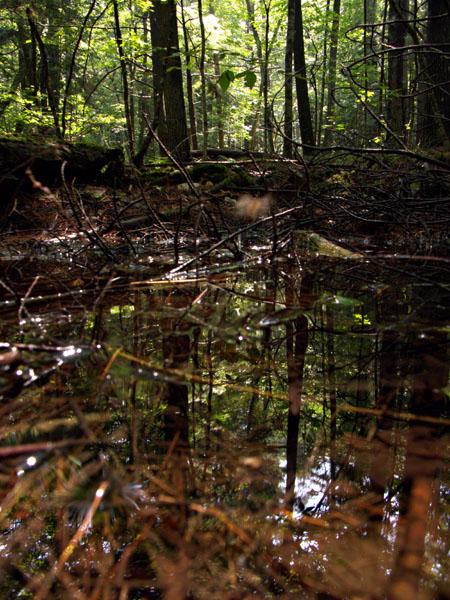 36_woods-refl_ok_4w.jpg
