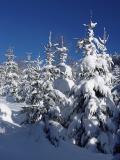 Grüße aus dem Thüringer Wald