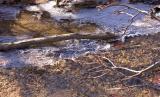 Icy Brook