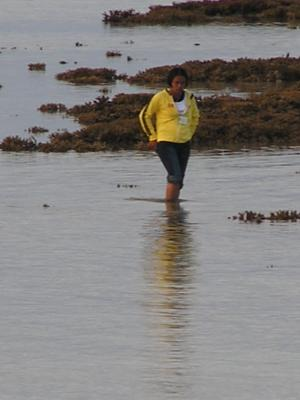 extreme low tide exposes reef