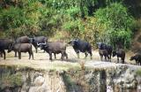 Uganda (Kibale Forest, Kampala & Queen Elizabeth NP)