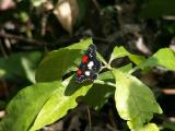 Belize Butterflies