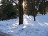 January Snows - Front Yard