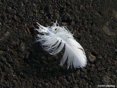 Feather on Asphalt