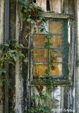 Old building and blackberry vine