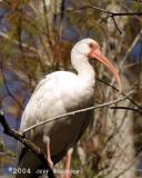 Florida Wildlife 2004