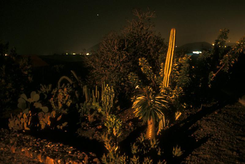 Garden of Casa El Hoyo by night
