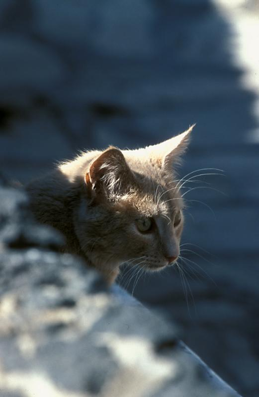 Cat waiting for Fish