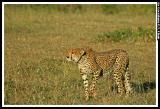 safari_sort_by_animal