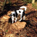 Joop's Dog Log - Friday Jan 16