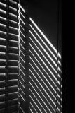 Morning Light - Black & White