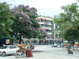 Bang Lang flowers-Hoan Kiem lake-Ha Noi