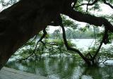 Thap Rua tower in Hoan Kiem lake-Ha Noi