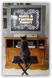 Cat's Addicted to Video Catnip