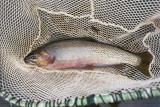 Fishing Washington