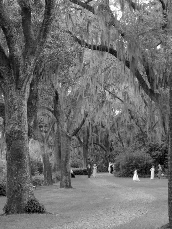 Wedding - Bok Tower Gardens
